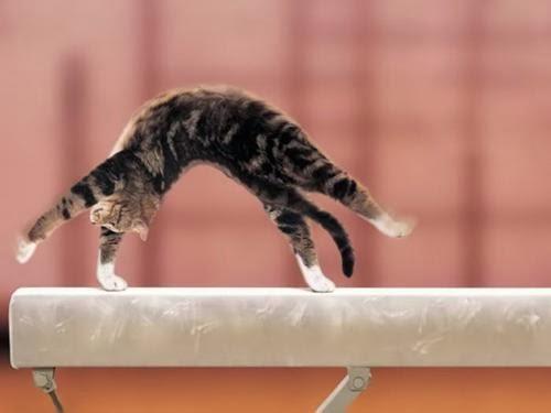 Kumpulan Gambar Kucing Terbaru