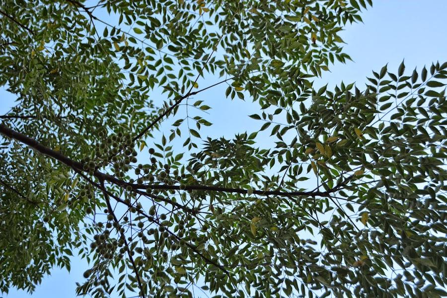 Plantas ornamentales usos for 2 plantas ornamentales
