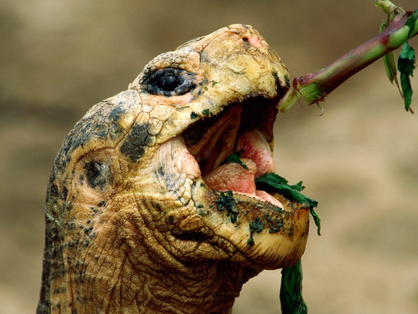 http://4.bp.blogspot.com/-xl-nbv-KKB8/UDmbe1KDE2I/AAAAAAAABQM/xWvgBY9MuB8/s1600/Turtle+Snack.jpg