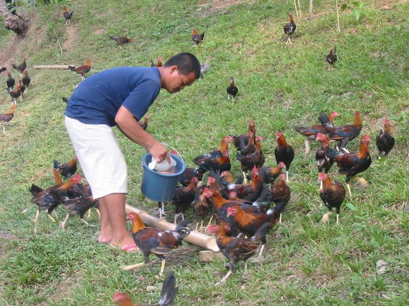 trivia ng pinakamalaking hayop sa pilipinas Makikita sa mga kagubatan sa mindanao ang pinakamaganda at pinakamalaking orkidyas  may kinalaman ang klima sa uri ng hayop na nabubuhay sa pilipinas 8.