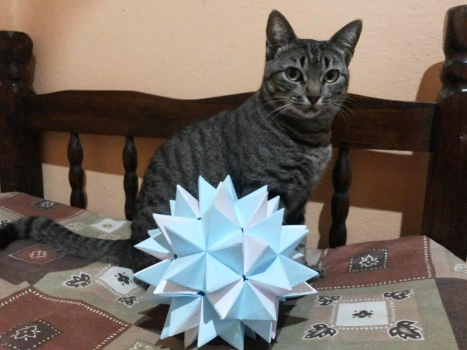 Maruska X Origami