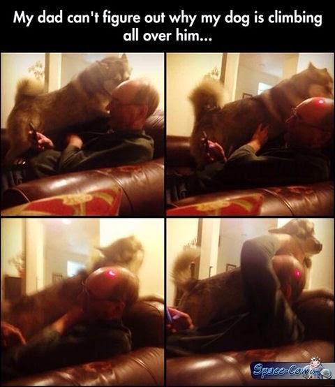 funny dogs pets pics