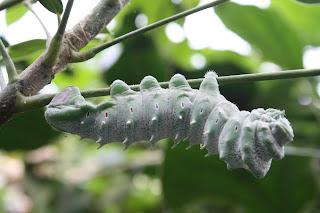 caterpillar Dierenpark Emmen November
