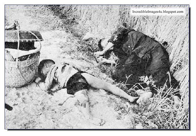 my lai massacre history