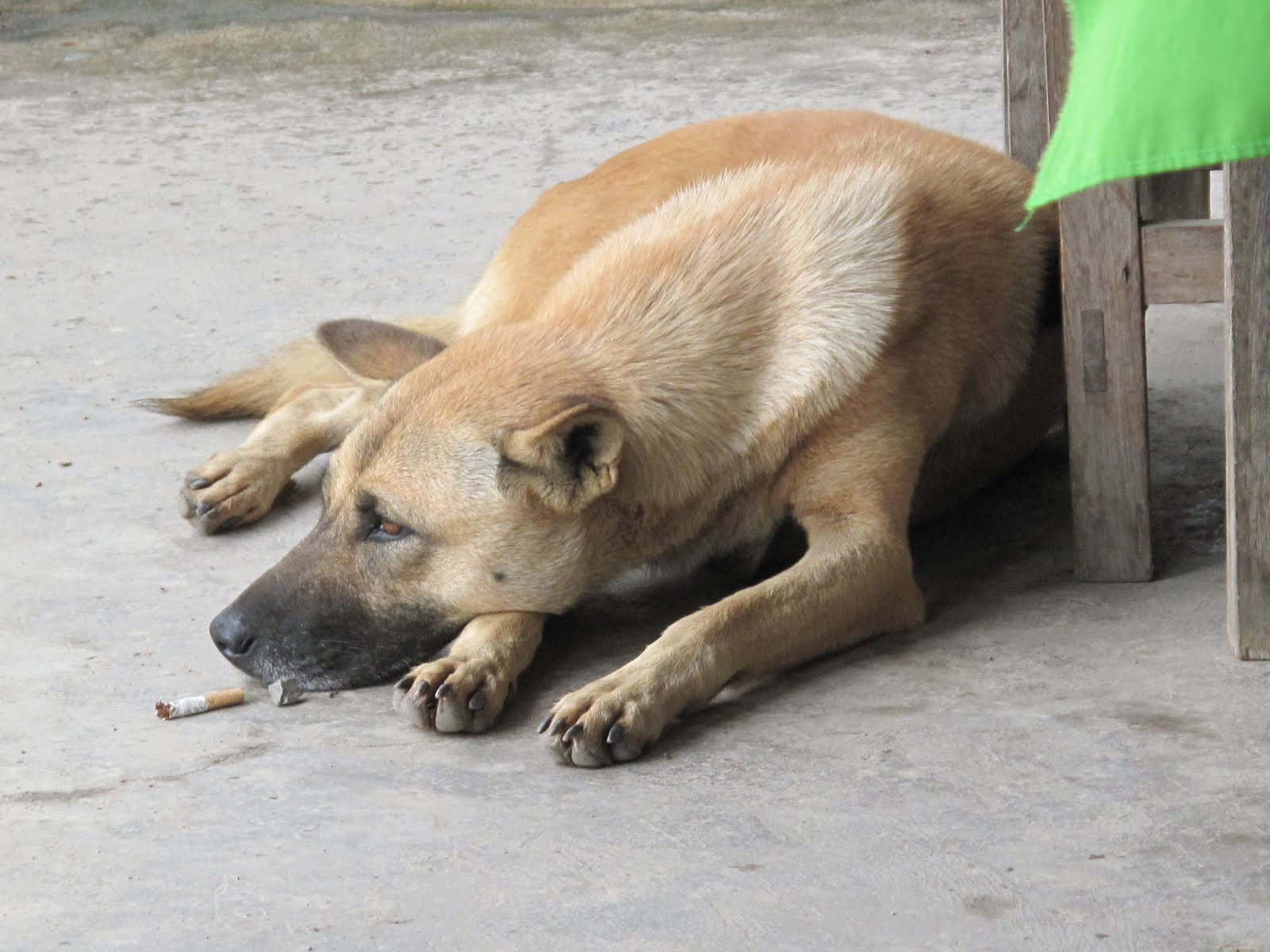 Spotted Dog is Typical of Myanmar's Uniqueness - MyanmarBurma.com
