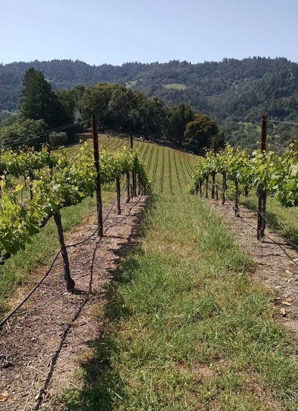 A Rockpile vineyard