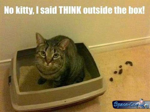 funny animals cute cat