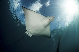 Underwater Housing Diluncrukan Nauticam Untuk Nikkon D600