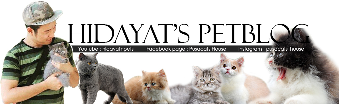 Hidayat's petBlog