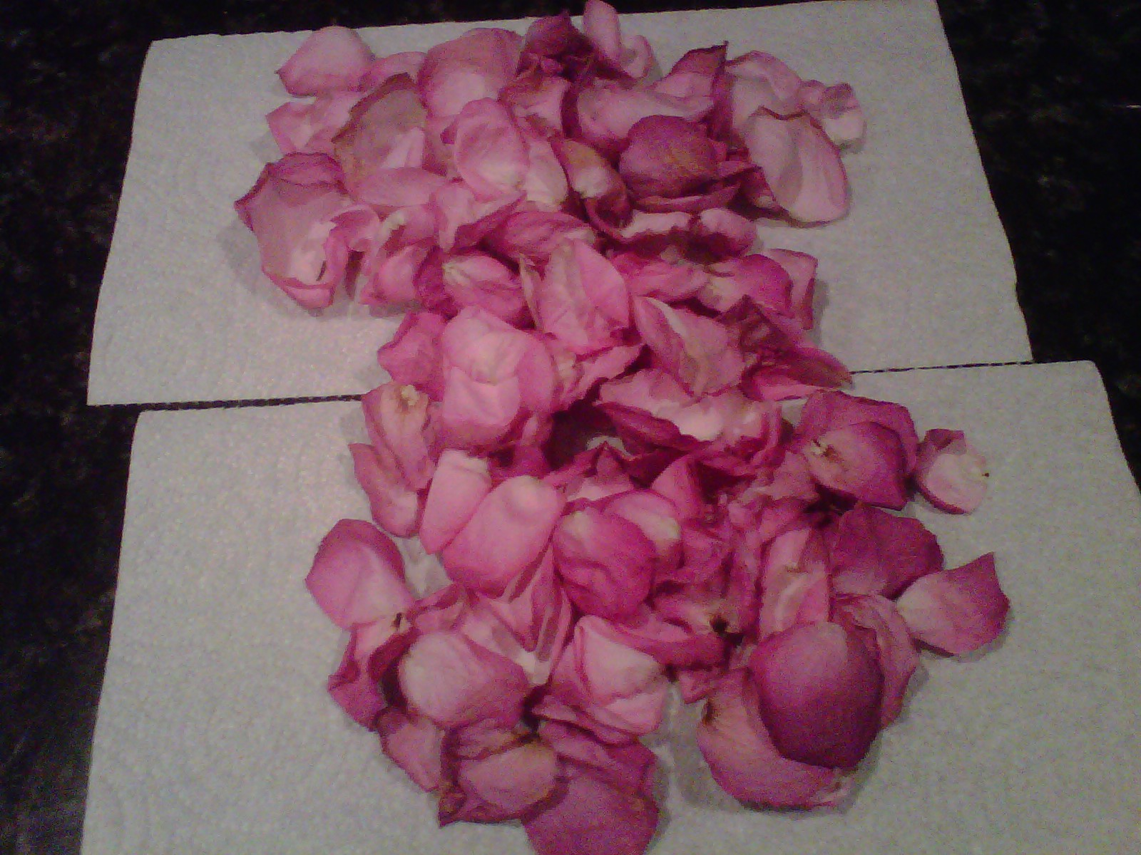 She laughs without fear of the future rose petal crafts - Crafts with flower petals ...