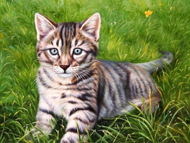 Im genes arte pinturas gato en jardin - Dibujos de gatos pintados ...