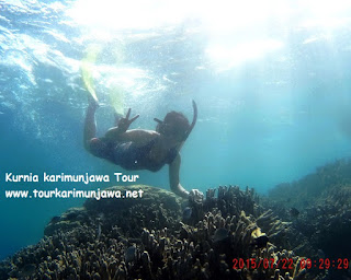 karimun trip snorkeling