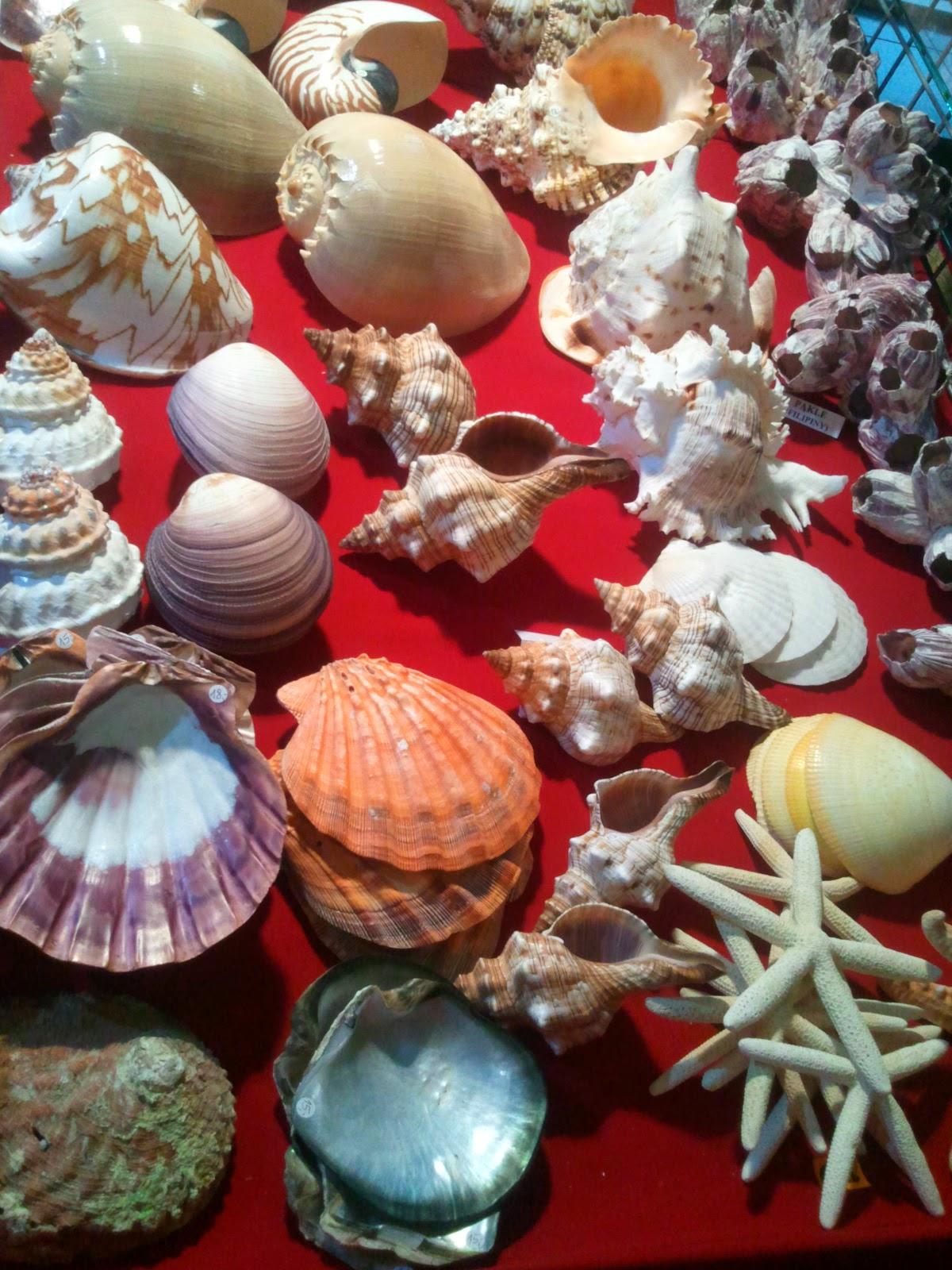 minerały morskie