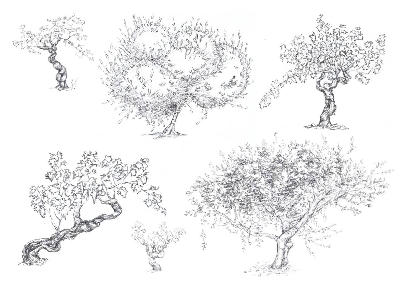 Estelle colin croquis d 39 arbres - Croquis arbre ...