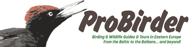 Probirder