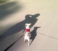 Фотография собаки на асфальте