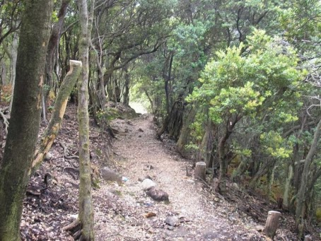 Jalur Pendakian Gunung Patuha