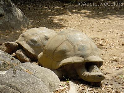 Tarta rughe le vostre immagini for Stagno artificiale per tartarughe