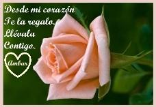 Una preciosa rosa, regalo de una gran amiga. Gracias Ambar.