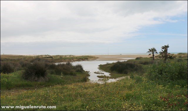 Playa-de-los-Bateles-Conil-Cádiz_1