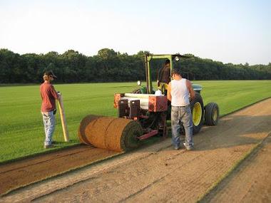Harvesting large rolls