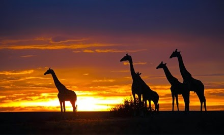 Kenya Safari Tour with Airfare