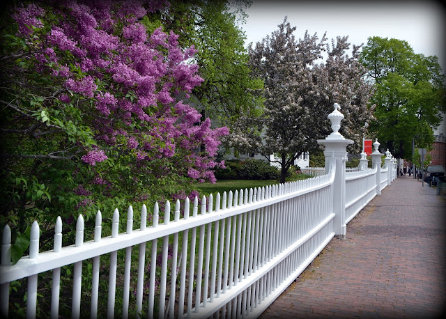 Ropes Mansion, Fence, Lilacs, salem, massachusetts