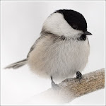Hear Awesome Bird Calls Online!