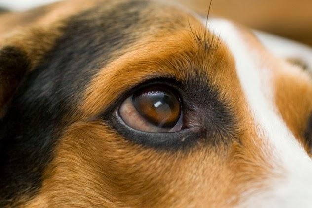 Conheça as 10 impressionantes histórias de cachorros