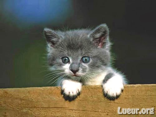 Image chaton mignon a t l charger photo de chat - Image des mignon ...