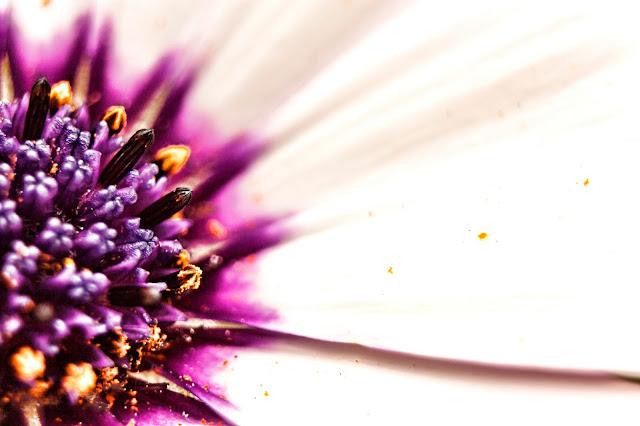 Flor en apogeo