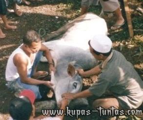 Rukun & Syarat Menyembelih Hewan - [www.kupas-tuntas.com]
