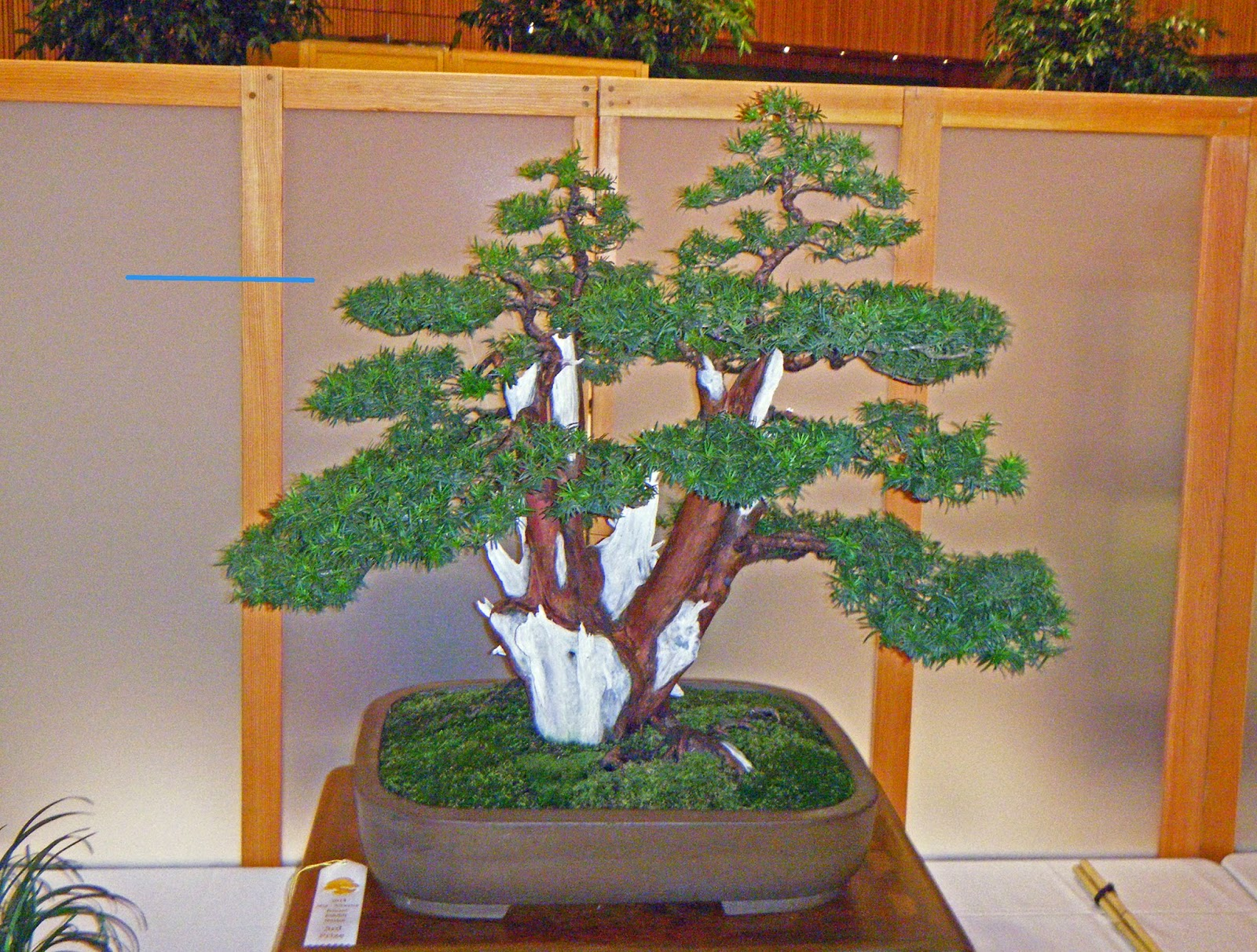 Bonsai In Hoosierland Mid America Bonsai Show 2014 Part 2
