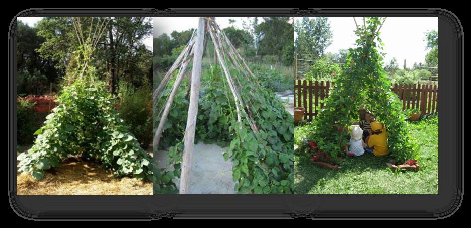 In en om die huis plant 39 n boontjie tent vir die kinders - Idee van allee tuin ...