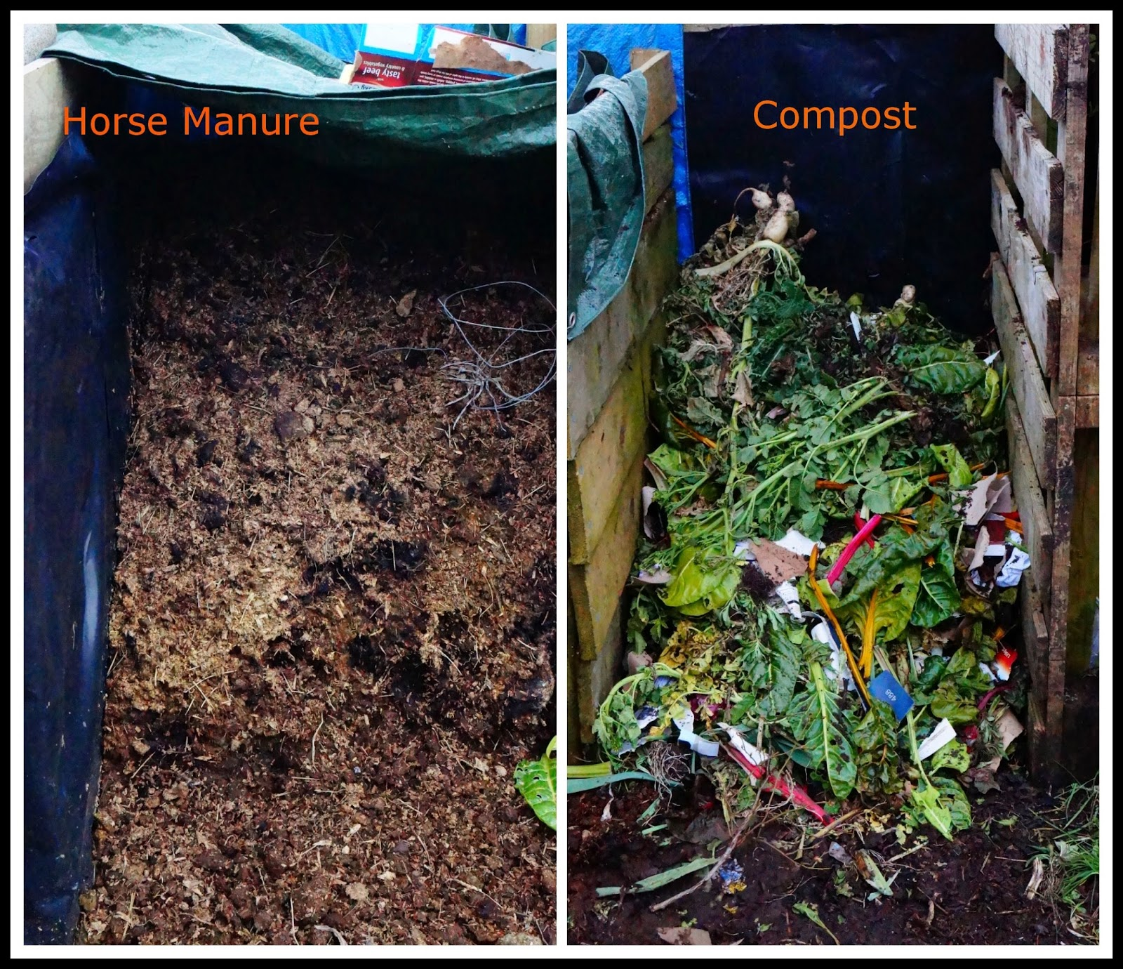 horse manure and compost bins - 'growourown.blogspot.com' ~ allotment blog