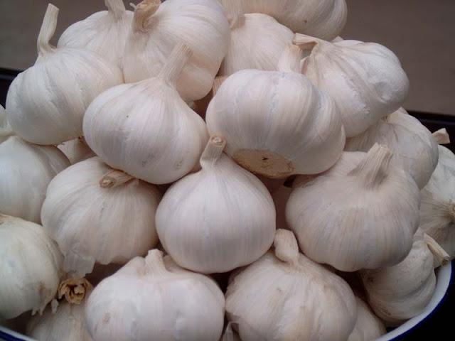 bawang putih, garlic, khasiat, angin ahmar, kanser, anti-bacteria, imunisation