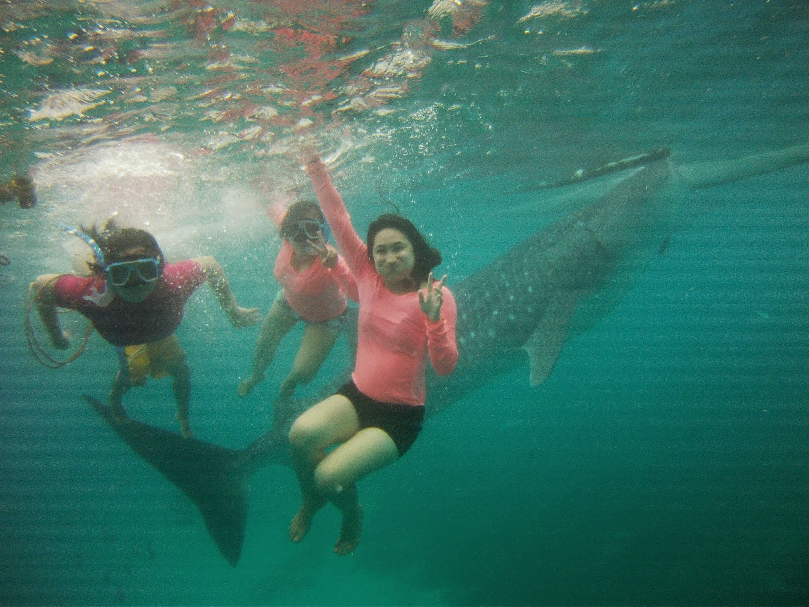 oslob swimming with whaleshark groufie