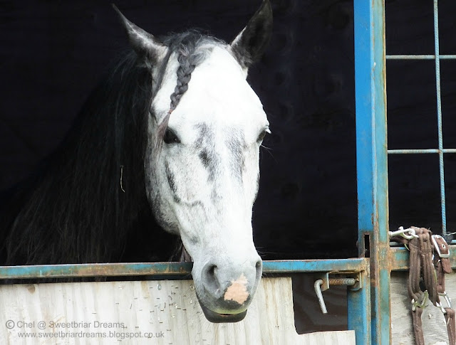 Albino horse eyes