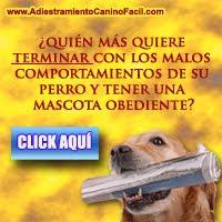 Adiestramiento Canino Facil