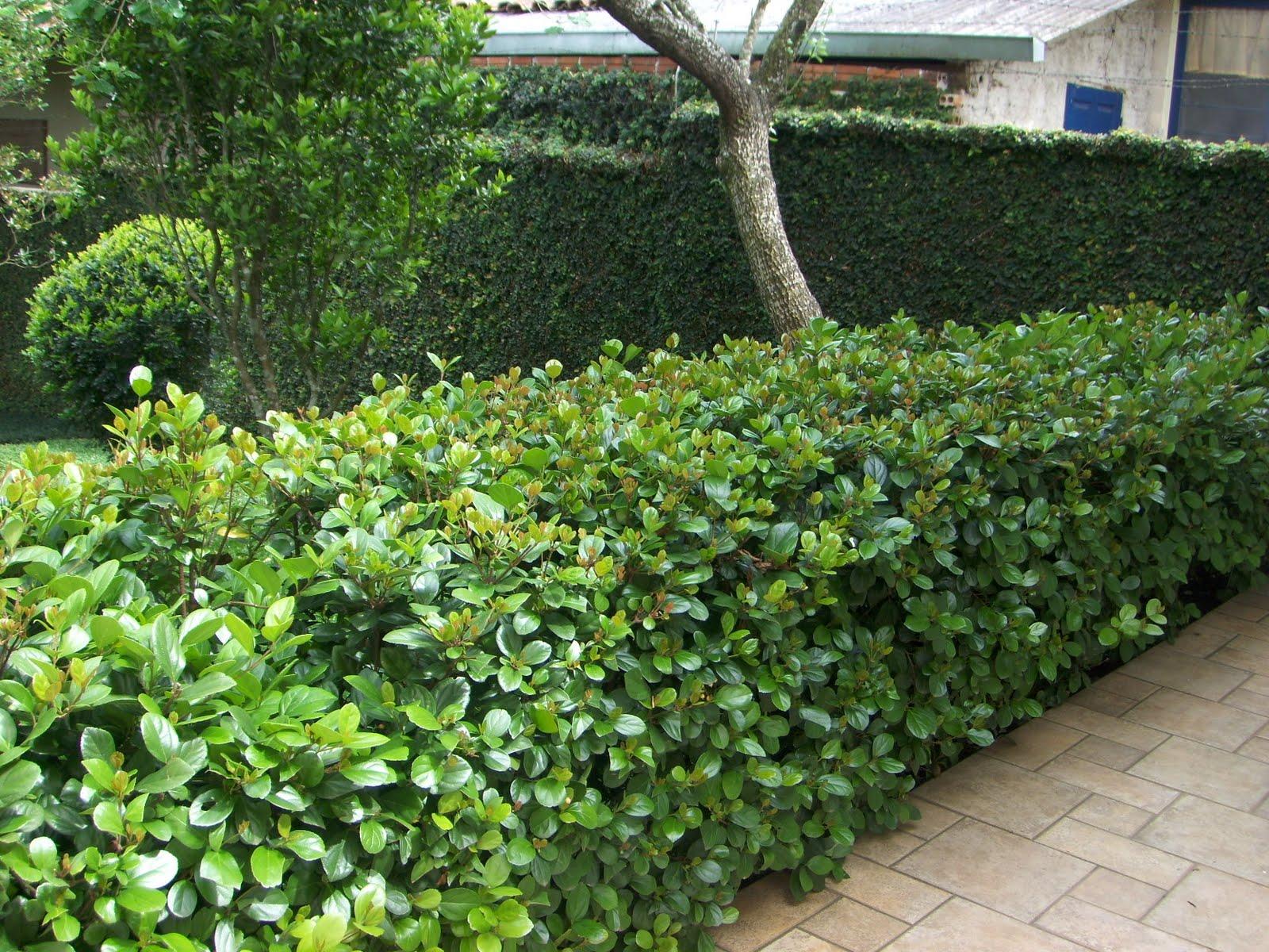 cerca viva para jardim fotos:cerca-viva é um recurso muito interessante para ser utilizado na