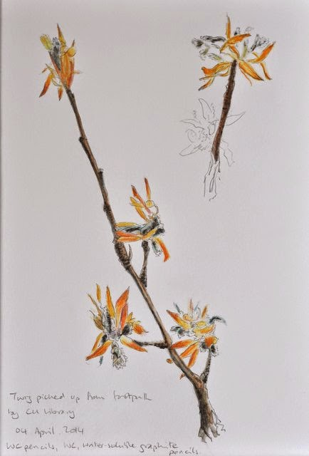 Watercolour pencil twig drawing natural world