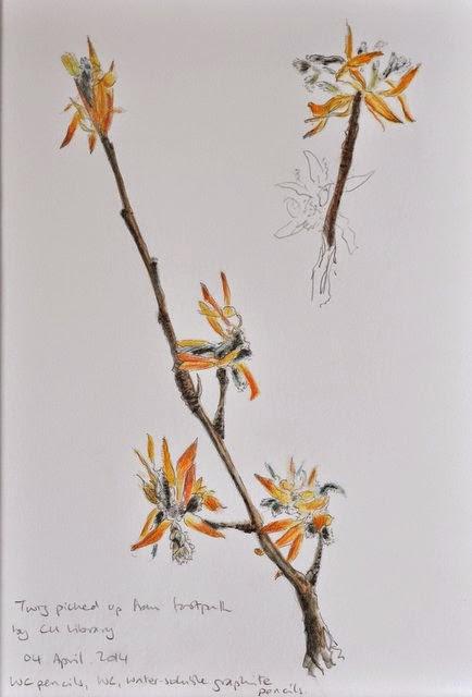 Watercolour pencil twig drawing natural world
