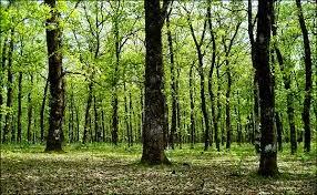 λαμπάνοβο, λάγκα, δάσος