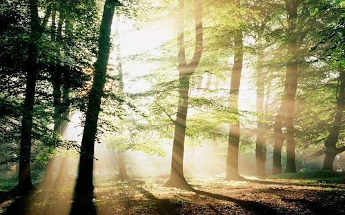 Gambar Hutan Lengkap