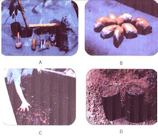 Proses Pembibitan duria dengan teknik sambung, A. Menyiapkan alat dan bahan, B. Menyediakan biji durian untuk batang bawah C. Mencampur media semai, D. Mengisi polybag untuk menyemai biji durian