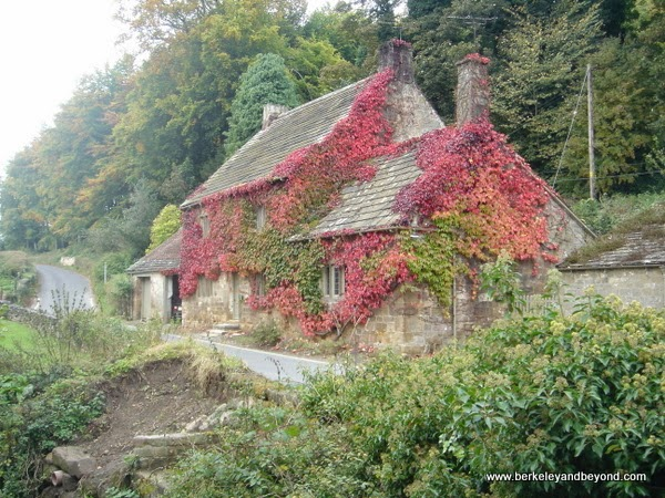 cottage covered with red creeper near Fountains Abbey in Ripon, North Yorkshire, England
