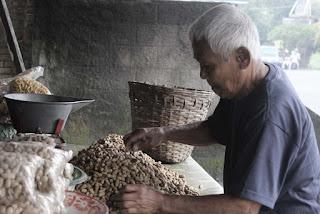 kacang gamping sleman