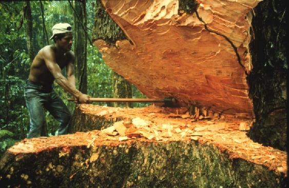 La selva amazónica ha disminuido