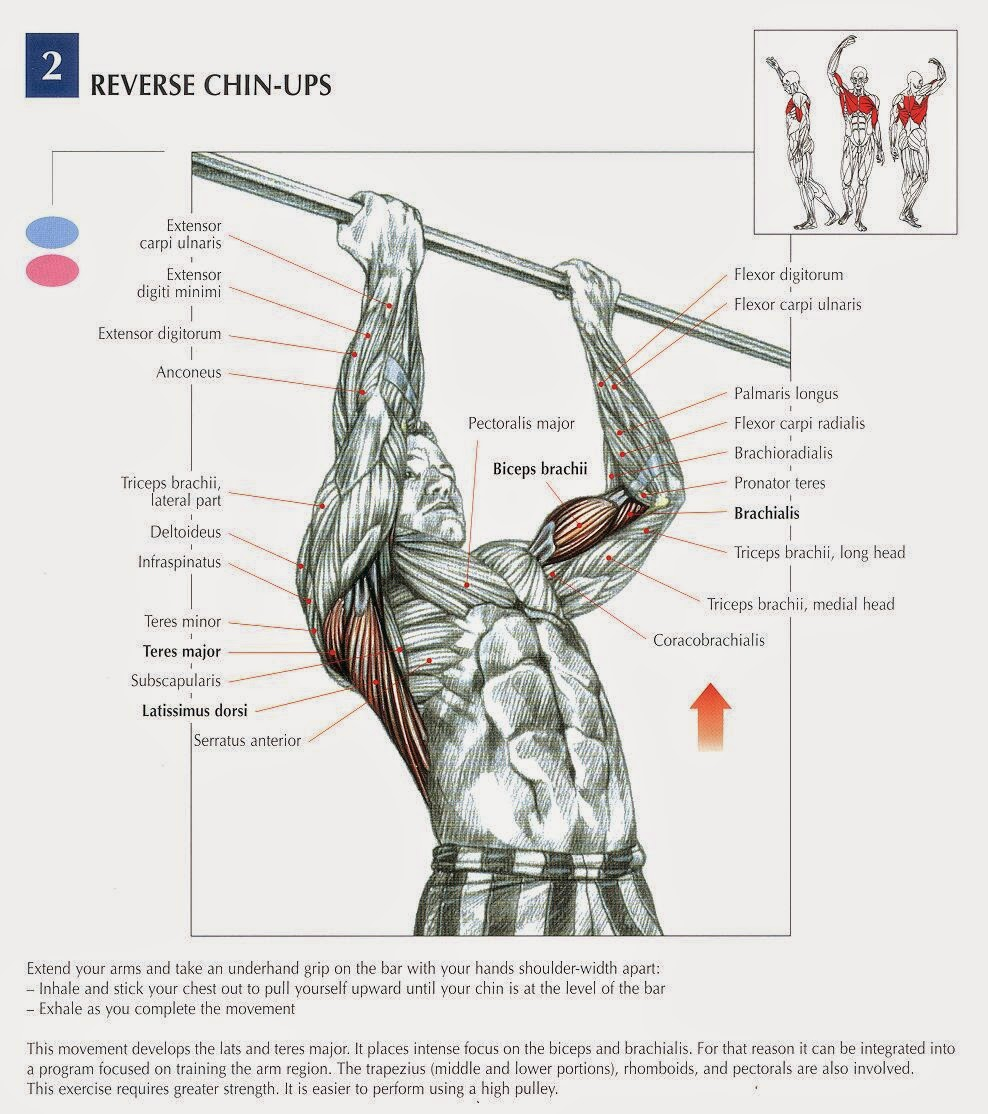 Best Bicep Workout For Mass - all-bodybuilding.com