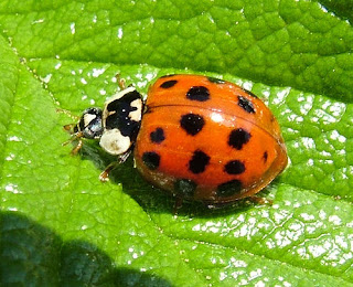 Ladybug can sound like ladyboy if you are not paying attention